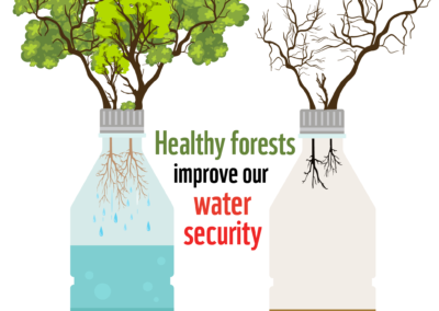 Forest and Water Security