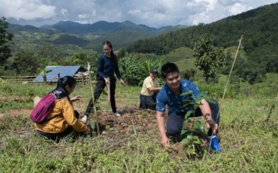 Reforestation in Chiang Mai