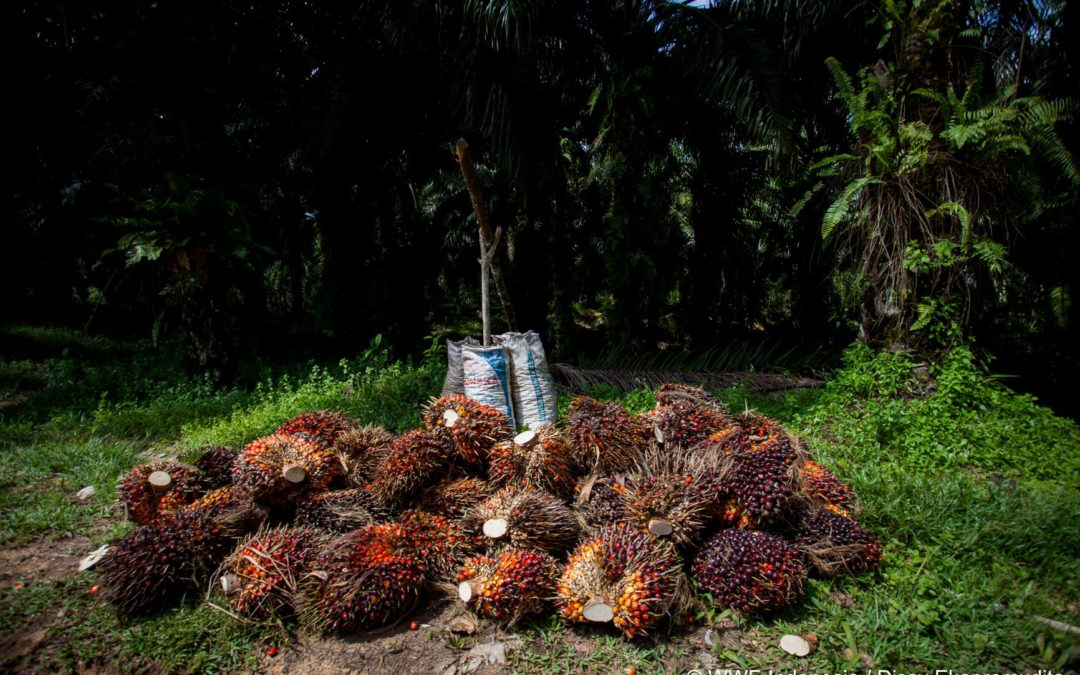 Sustainable Palm Oil Media Trips